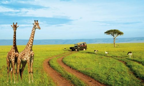 Kenya Safari – a wildlife experience