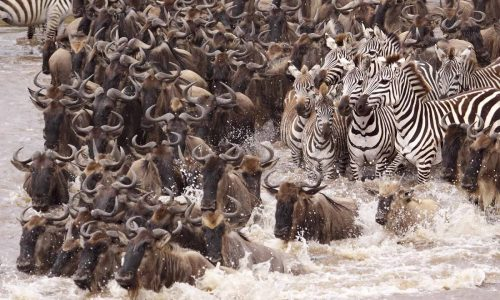 The Serengeti Wildebeest Migration Experience