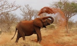 elephant-111695_640